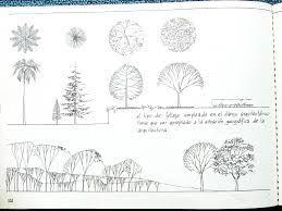 Resultado de imagen para arboles en planta y alzado