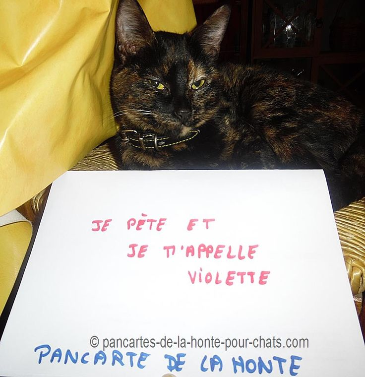 « I fart and my name is Violette » #lolcats #shameyourpet #shameyourcat #cat #cats #chats