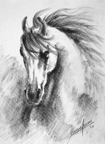 pencil drawings   horse head pencil drawing