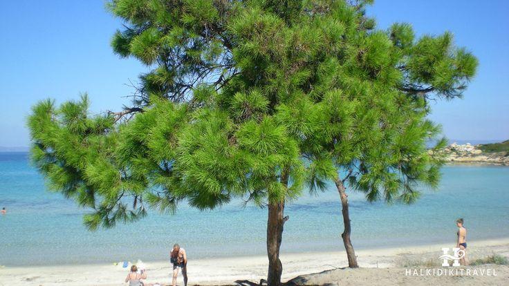 #Vourvourou #beach in #Halkidiki. Visit www.halkidikitravel.com for more info. #HalkidikiTravel #travel #Greece
