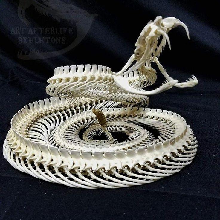 Snake Skeleton Diagram