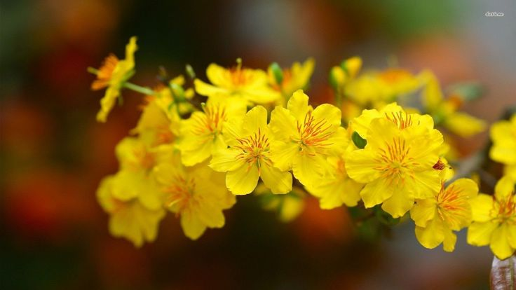 Eugen Doga  - Early Spring