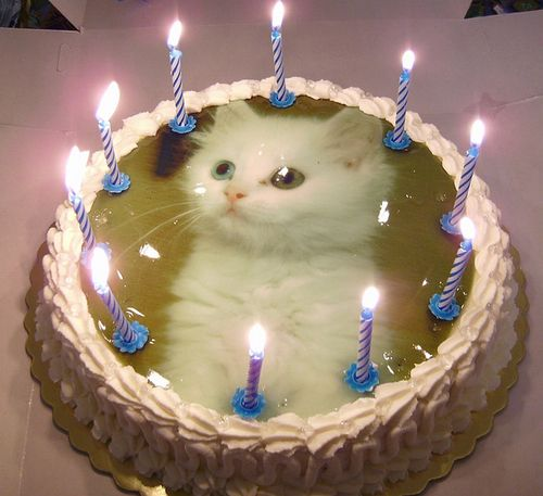... Cat Birthdays on Pinterest  Cats, Happy birthday and Grumpy cat