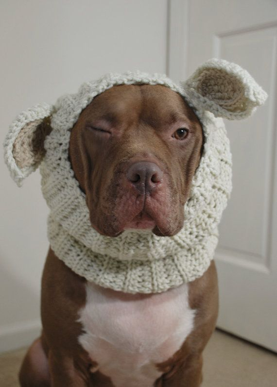 Dog Snood Lamb Crochet Large by courtanai on Etsy, $35.00