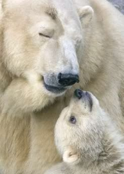 Polar bear and her baby