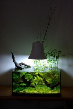 97 best aquarium ideas images on pinterest aquarium ideas fish aquariums and fish tanks. Black Bedroom Furniture Sets. Home Design Ideas