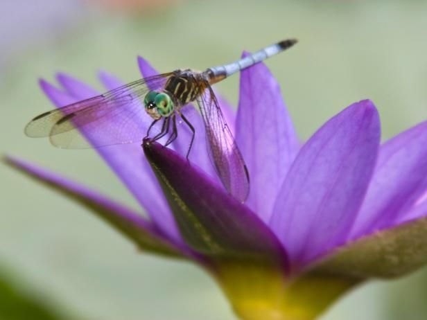 The experts at HGTV.com show how to attract mosquito-eating dragonflies to your garden.