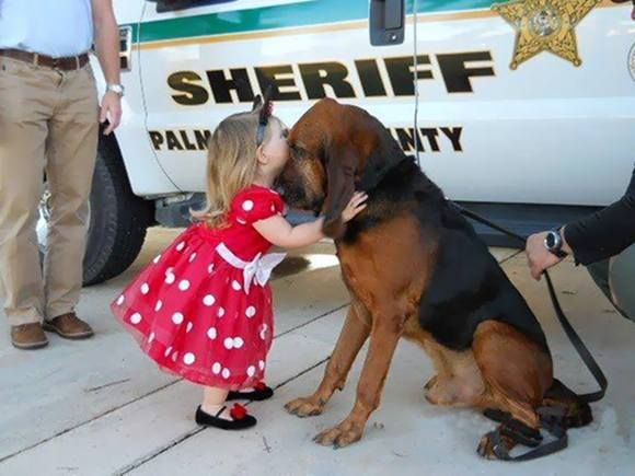 Clue, a law enforcement bloodhound from Palm Beach, Fla., who helped find missing children, died at the age of 10 on January 31, 2014.  The ...