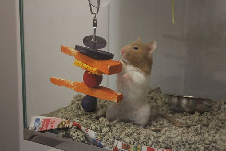 Can Hamsters have Carrots? Pets, Carrots, Canning