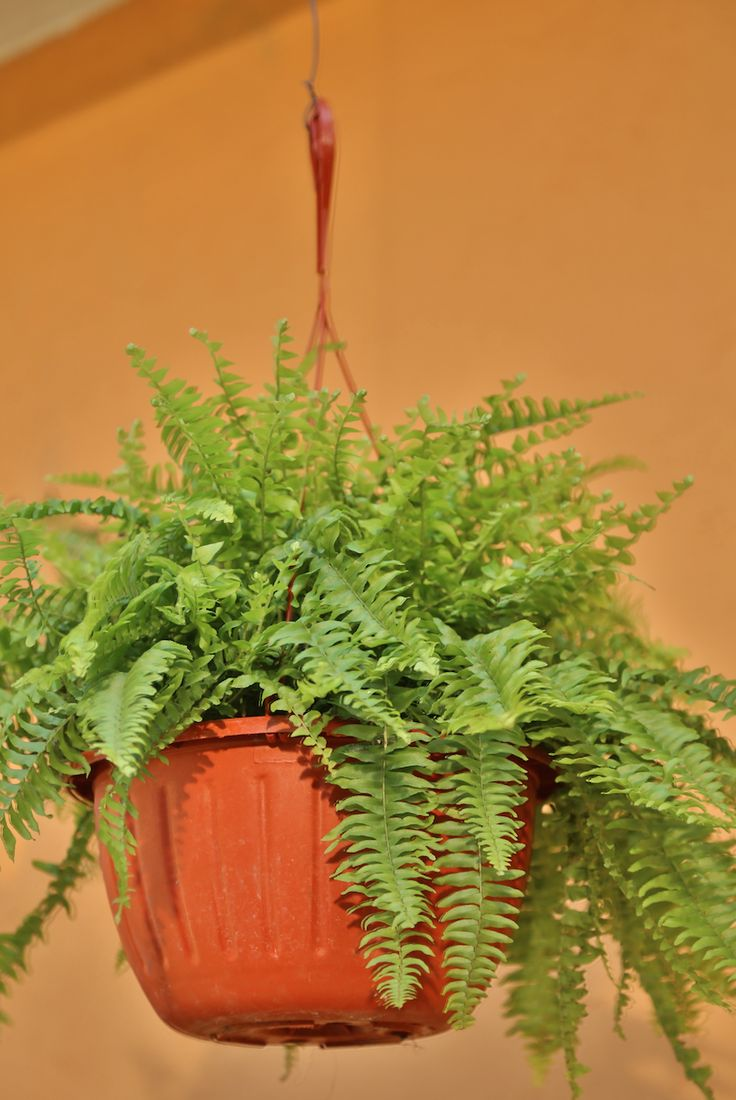 Agrega macetas colgantes y crea un ambiente nuevo a tu jardín.