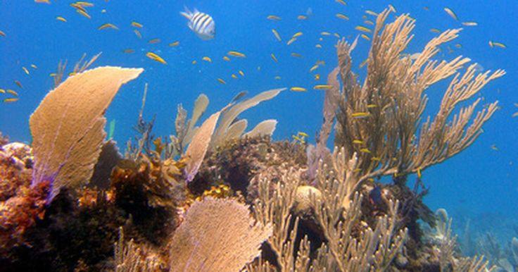 Que tipos de animais marinhos vivem nas barreiras de coral? . De acordo com o World Biomes na Universidade da Califórnia, Santa Barbara, recifes de corais fornecem abrigo para cerca de 25% de toda a vida marinha. Algumas criaturas simplesmente usam os recifes de coral como um oásis temporário, enquanto outras vivem no recife em tempo integral. Os animais que vivem dentro ou em torno deste ambiente incluem ...