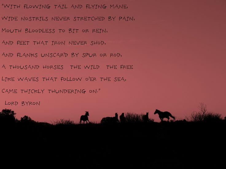 The 25 Best Horse Poems Ideas On Pinterest Quotes