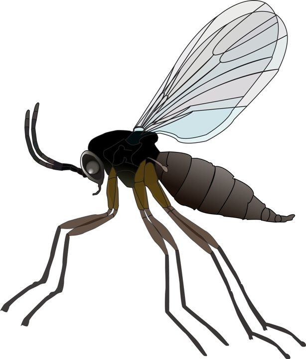 How to Kill Gnats? Gnats are most annoying pest found in the world. It is quite hard to identify them, but they are enough to cause a big trouble inside your life. They are basically the pesky insects that are very common in the world. They are tiny flying insects like flies, mosquitoes. In the weather of June and... #BestWaysToGetRidOfGnats, #DrainFlies, #FruitFlies, #GetRidOfGnatsFast, #GetRidOfGnatsInHome, #GetRidOfGnatsInTheKitchen, #GetRidOfGnatsInsideHome, #GetRidOfGn