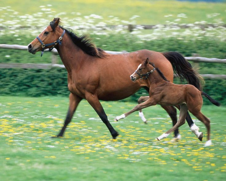 Brown Baby Horses Image Horse