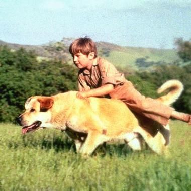 Hot: Kevin Corcoran Old Yeller actor and Sons of Anarchy producer dies at 66