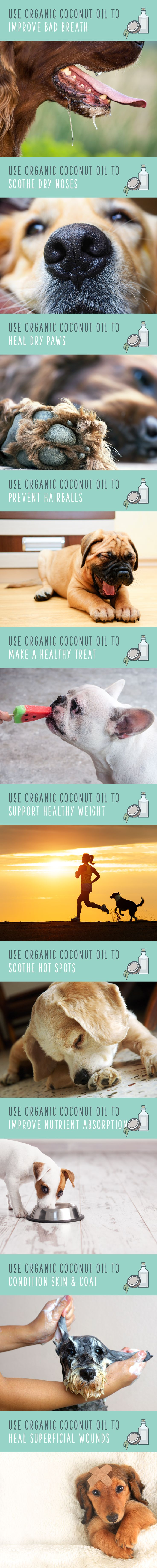 Raw coconut oil is a simple, natural remedy for many of your dog's health problems! And it's healthy when they inevitably lick it off