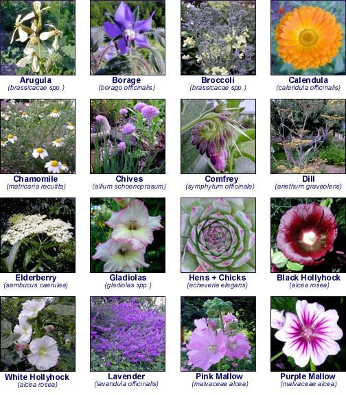Edible Flowers and their flavors