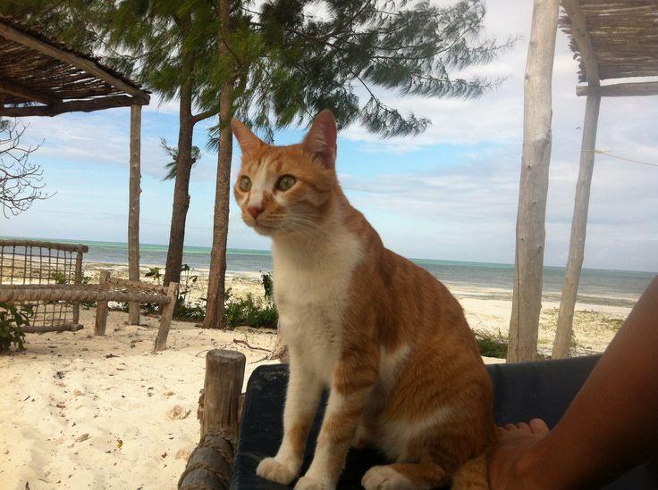 nasza kicia na Zanzibarze
