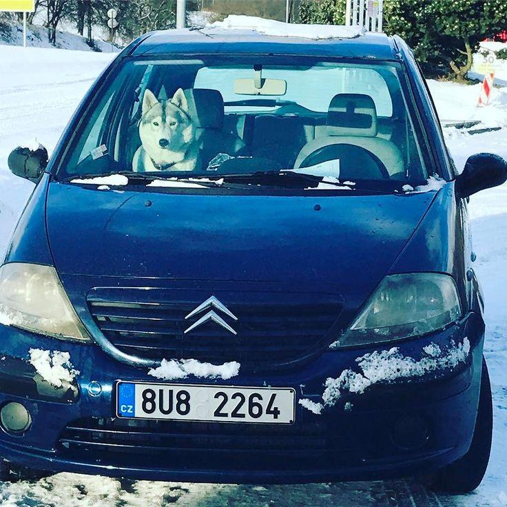 Самое главное в путешествиях  это хорошая компания   #чехия #январь #едем #подруга #хаски #зима #снег #travel #czechrepublic #januar #husky #czech