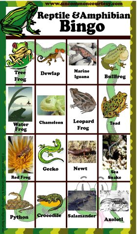 FROG BINGO GAMES  | Reptile and Amphibian Bingo Game