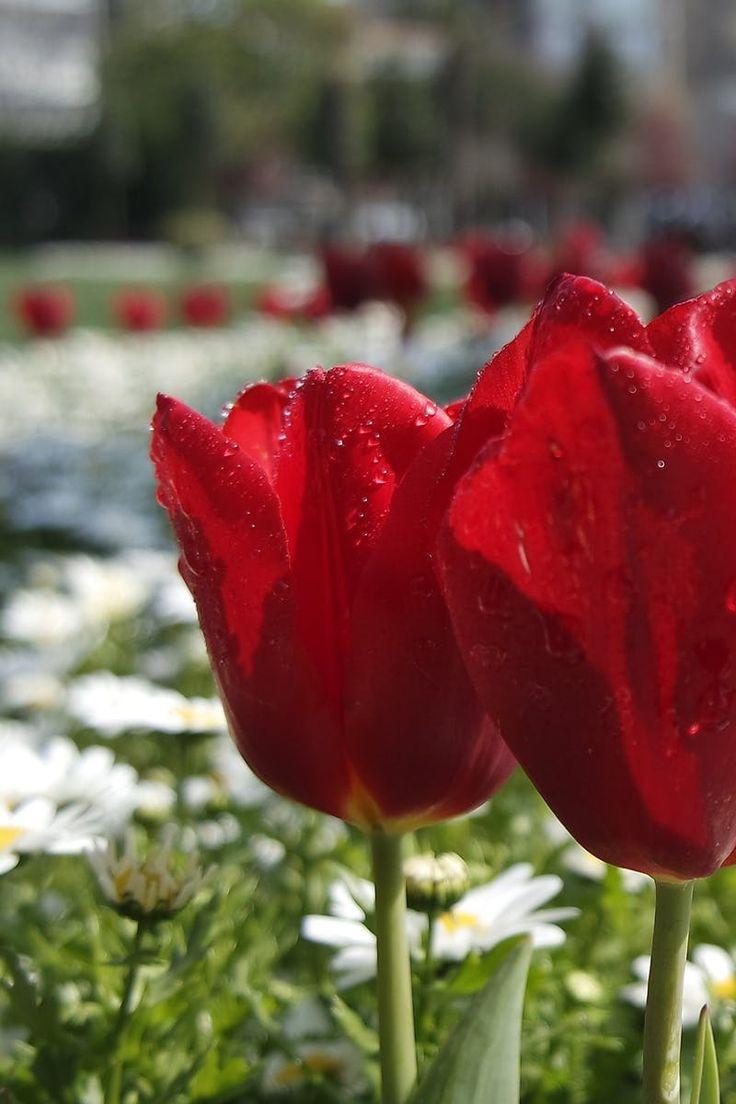 Red Petal Flower Near White Daisy