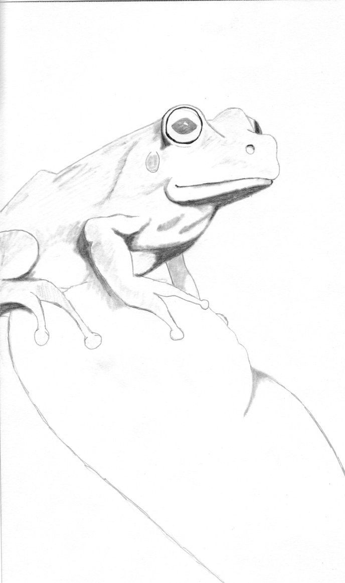 332 best sketches of frogs images on pinterest frogs sketching