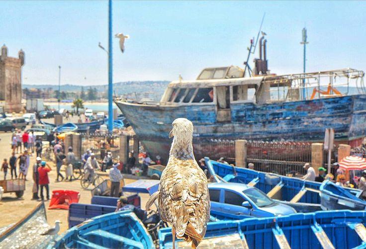 Essaouira harbour Morocco
