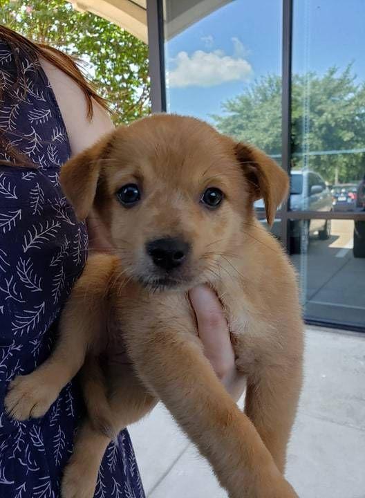 Pets For Adoption Petfinder Pets Puppy Adoption Dog Adoption