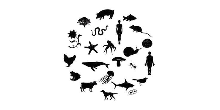 Türkiye ve hayvan hakları problemi https://gaiadergi.com/turkiye-hayvan-haklari-problemi/?utm_content=bufferdffaf&utm_medium=social&utm_source=pinterest.com&utm_campaign=buffer #hayvanhakları #türkiye