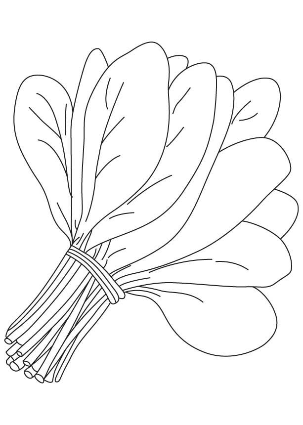 Bunch Of Spinach Leaves Coloring Page