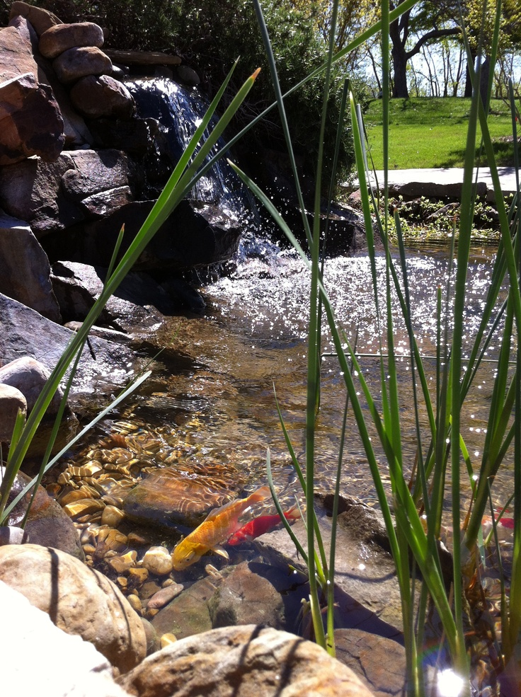 how to build a fish pond cheap