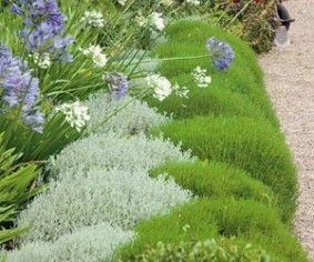 Les santolines : en terre sèche et pauvre, plein soleil. gris argenté pour la santoline petit cyprès (Santolina chamæcyparissus) et vert vif pour celle à feuilles de romarin (S. rosmarinifolia)