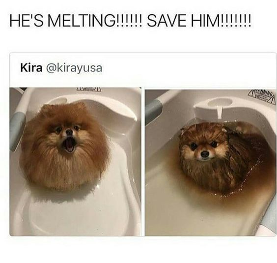 Funny Animal — 40 Pics<<< I can't help but notice that the person's name is KIRA!