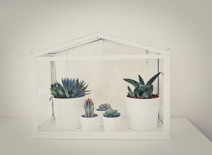Succulants and cacti ...  Loving my mini green house