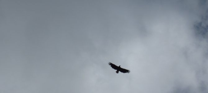 Un jour, une photo : Aigle de Yellowstone