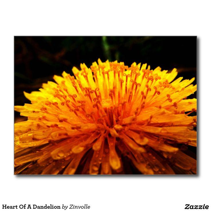 Heart Of A Dandelion Postcard