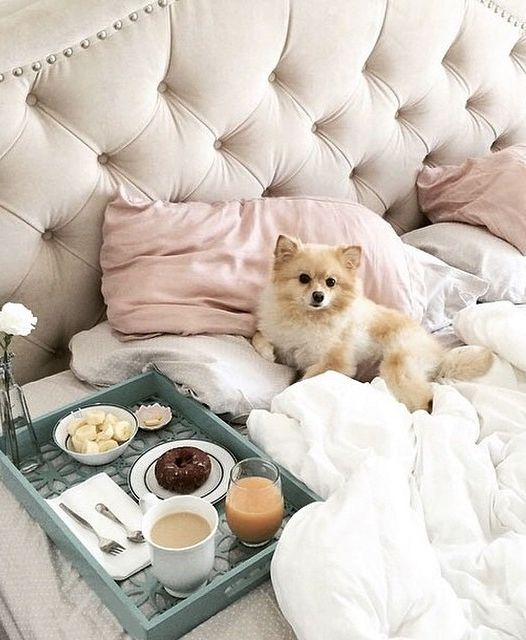 Breakfast in bed, anyone? @coconut_la gets some R&R on our Nicolette Bed. Available in 5 colors--click to shop.