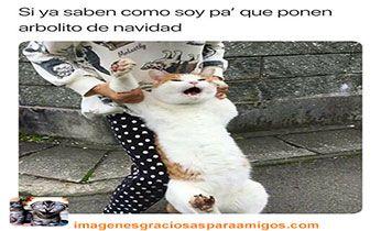 Miau ... 😭😂😂  Mas imágenes aquí 👉 imagenesgraciosasparaamigos.com  #imagenesgraciosasparaamigos #imagenesgraciosas #memes #gatos