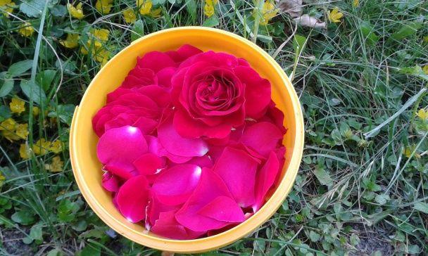 Ružový sirup (fotorecept) - obrázok 1