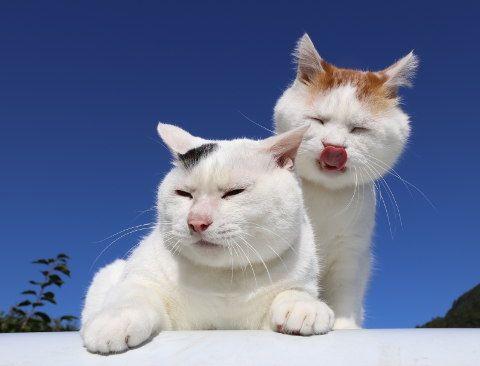 しろとみみ - かご猫 Blog