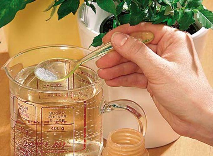 Хотите, чтобы ваши комнатные растения цвели пышно и часто? Прислушайтесь к советам опытных флористов.