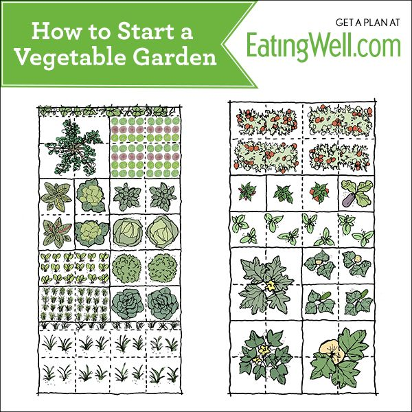 How to start a vegetable garden future garden pinterest for Starting a vegetable garden