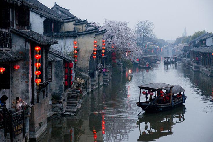 Sakura in Xitang by Xianyi Shen shenxy