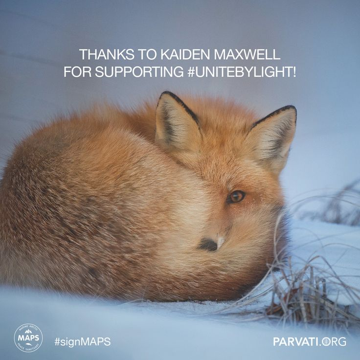 Gratitude to Kaiden Maxwell for supporting #unitebylight for the Marine Arctic Peace Sanctuary! #signMAPS parvati.org