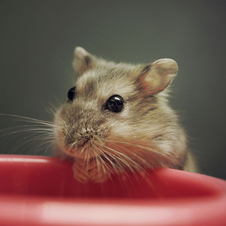 Mejores 10 imágenes de Animal en Pinterest | Animales, Fotos y ...