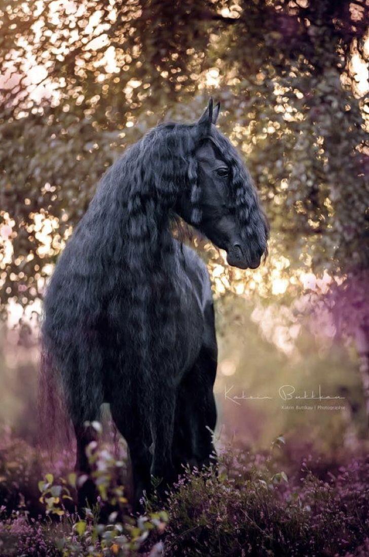 Epingle Par Lasserre Charrade Meline Sur Animaux Cheval Frison Mustangs Sauvages Races De Chevaux
