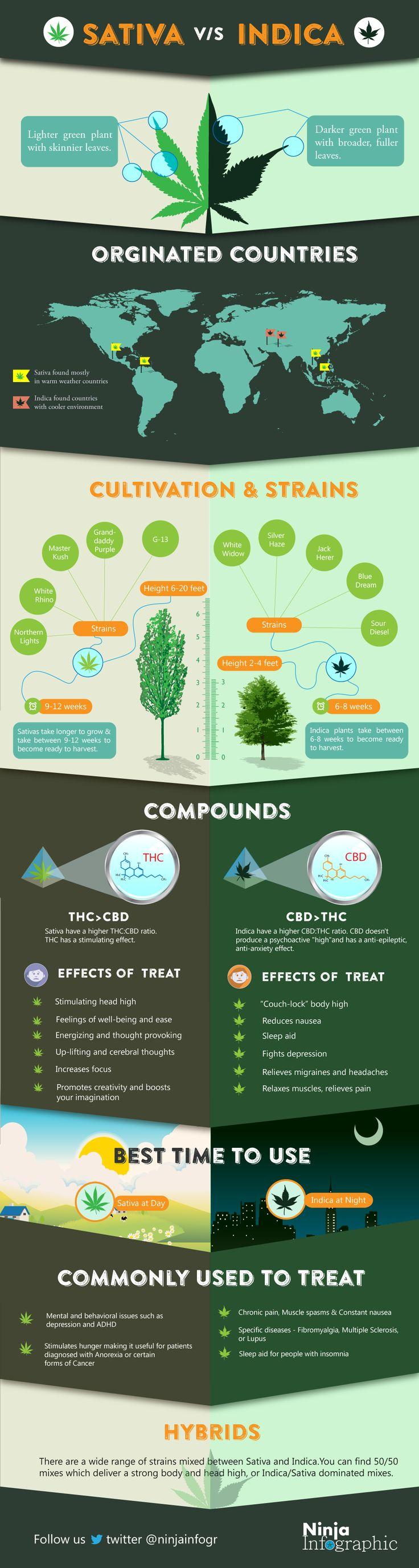 Sativa vs Indica    #infographic #Marijuana #Drugs
