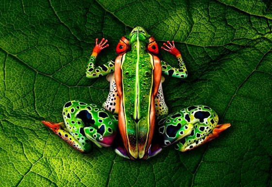 Amazing Body Painting Art: Johannes Stotter