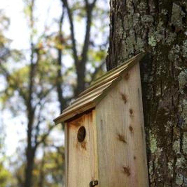 Most birds prefer a basic, single-family birdhouse.