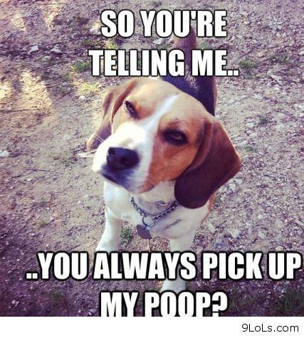Funny Dog Bite Meme Quotes